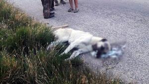 Vicdansızlar Sokak köpeklerini zehirleyerek öldürdüler
