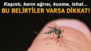 Böcek sokması belirtileri neler Böcek sokmasına ne iyi gelir