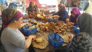 Sinop mantarı Avrupa mutfağının baş tacı
