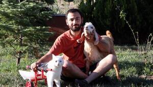 Sokak hayvanlarının gönüllü dostları