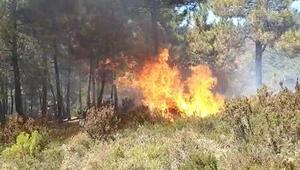 Son dakika... Sultanbeylide orman yangını