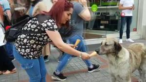Köpeğin dondurma keyfi