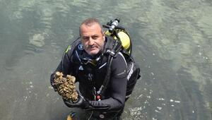 Aygır Gölü'ndeki zebra midye tehdidi için bakanlık devreye girdi