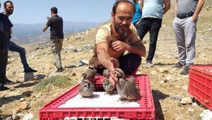 Nurhakta 2 bin kınalı keklik doğaya bırakıldı