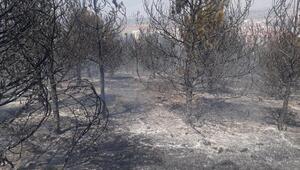 Ankarada 20 dönüm orman alanı yandı