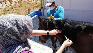 Mardinde yaralı at, tedavi için İzmire gönderildi