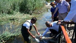Boluda göllere sazan balığı yavrusu bırakıldı
