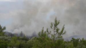 Milasta orman yangını çıktı
