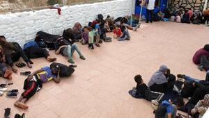 Çeşmede, 241 kaçak yakalandı