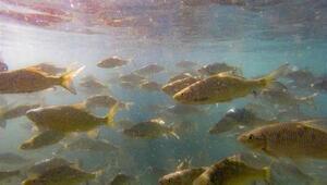 Batmandaki balıklı göl turizme kazandırılacak