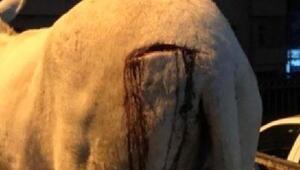 Bahçesine giren eşeği keserle yaralayan kadına soruşturma