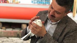 Ankara'dan uçtu Boyabat'a kondu