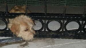 Başını demir kapıya sıkıştıran yavru köpeği itfaiye kurtardı