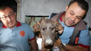 Apartman boşluğunda 10 gündür mahsur köpek kurtarıldı