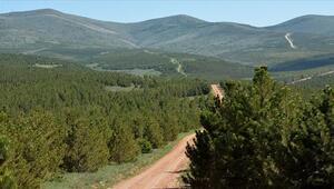 BOTAŞ 1 milyon 200 bin metrekarelik alanı ağaçlandıracak