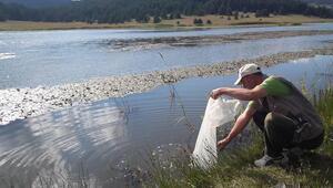 5 gölete 13 bin yavru balık bırakıldı