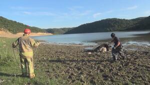 Arnavutköyde göl kenarında çamura saplanan mandayı itfaiye kurtardı