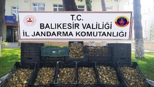 Evdeki 6 bin 300 zambak soğanı için 60 bin lira ceza kesildi