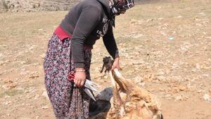 Kayseride kırpılan koyunların yünleri, çeyiz oluyor