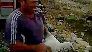 Ayağına poşet takıldığı için yuvada mahsur kalan leylek kurtarıldı