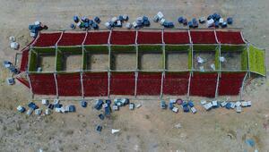 Rengarenk Antep kurutmalıkları tezgahlara asıldı