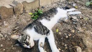 4 yıldır beslediği kedisini tüfekle vurulmuş halde ölü buldu