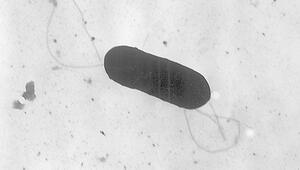 Sıtma parazitleri Güneydoğu Asyada hızla yayılıyor