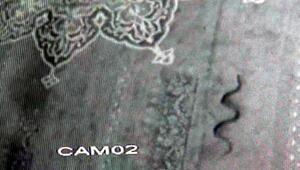 Camiye giren yılan, 3 gün sonra yakalandı