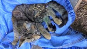 Bursada korkunç olay Kediyi böyle öldürdüler