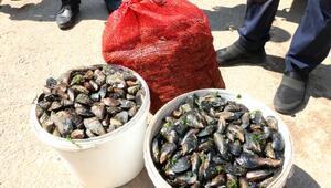 Antalyada, sağlıksız 1 ton 180 kilo midye dolmaya el konuldu