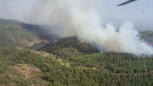 Torbalıda orman yangını