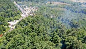 Çıra için gövdesi oyulan ağaçların tedavisi memnunlukla karşılandı