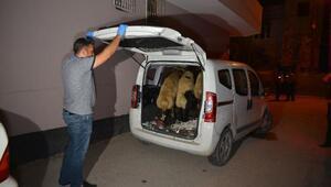 Dur ihtarına uymadılar, hayvanları araçta bırakıp, kaçtılar