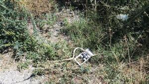Yılanı vurmak isterken eşini öldürdü