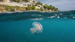 Tatilcilere denizanası ve çarpan balık uyarısı