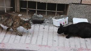Hayvanların mama kabını betonla doldurdular