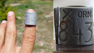 34 yaşındaki leylek Eskişehir'de elektrik tellerinde can verdi