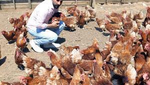 Hobi olarak başladı, tavuk çiftliği kurdu
