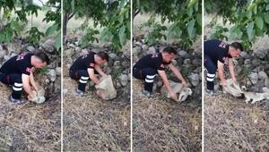 Vicdansızlık Yavru köpek ağzı bağlı çuvalın içinde yol kenarına bırakılmış