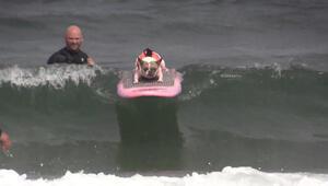 Köpek sörf şampiyonasına büyük ilgi