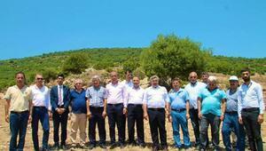 AK Partili Yayman: 70 bin fıstık çamı dikilecek
