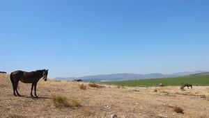 İzmirde şoke eden olay Bağlı, yem ve su yok... Ölüme terk edildiler