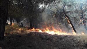 Gaziantepte ormanlık alanda yangın