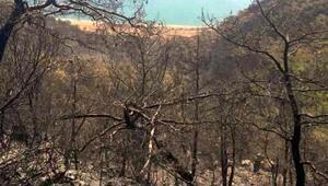 Mersinde orman yangını