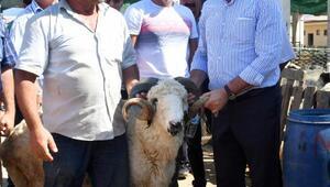 Başkan Dündar'dan kurban pazarına ziyaret