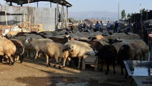 Hayvan pazarında yoğunluk var, alıcı az