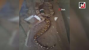 Antalya Otogarında yılan operasyonu kamerada