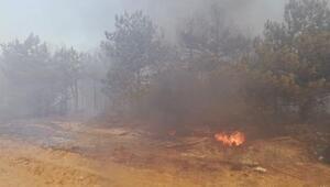 Gebzede mesire alanındaki yangın, ağaçlara sıçradı