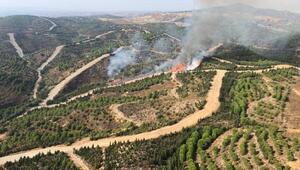 Seferihisarda orman yangını