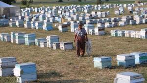 Muğlalı kadın arıcı 27 yıldır Yüksekovada arıcılık yapıyor